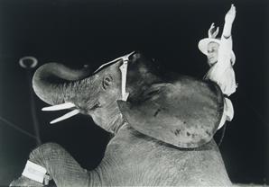 Circusolifant